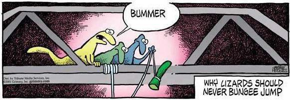Funny Picture - Why lizards should never bungee jumpFunny Lizard Jokes
