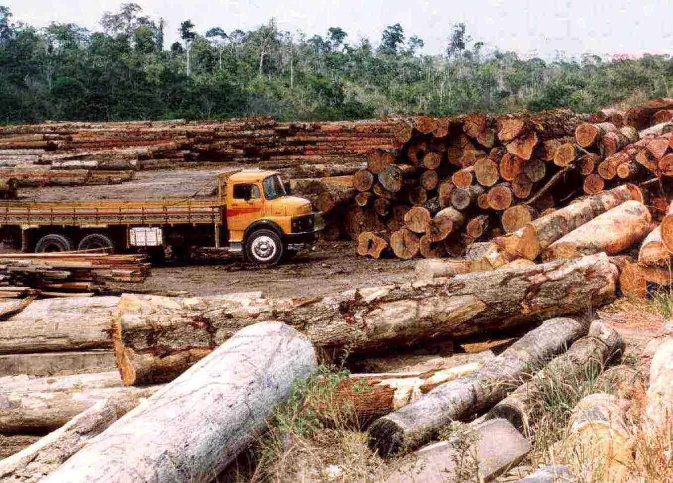 Resultado de imagem para fotos desmatamento da floresta amazonica