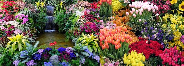 How To Grow Outdoor Indoor Plants Flowers Urdu Guide