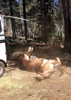 How to Go Horse Camping - Where to Keep Your Horse - HiTie
