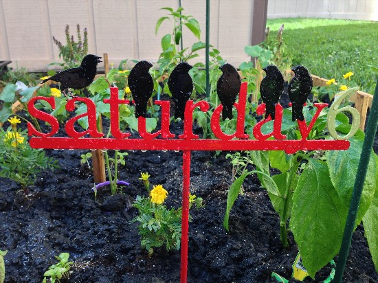 The Rainforest Garden How I Used A Cultivator To Start A