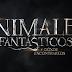 Pasando un Buen Fin con Animales Fantásticos y donde encontrarlos