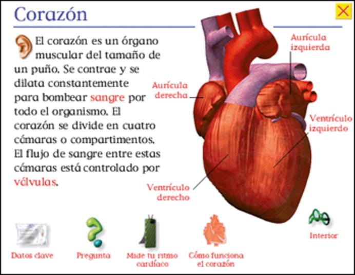 Puntero De Ubicación Con Un Corazón: EL CORAZON