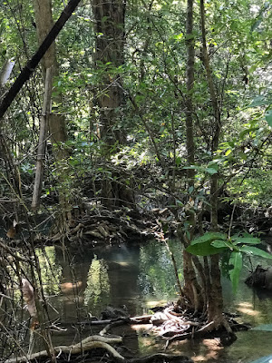 the thick jungle around the Maekhamin Falls