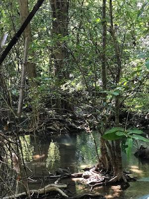 the thick jungle around the Maekhamin Falls