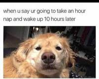 funny memes about work, funny memes for kids, Funny animal gifs, cute funny memes, funny pictures, cuteness meme