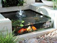 Kolam minimalis dengan kaca dan air terjun - tukang kolam koi di Sidoarjo dan Gresik