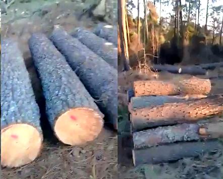 Dañan santuario de luciernagas por tala ilegal