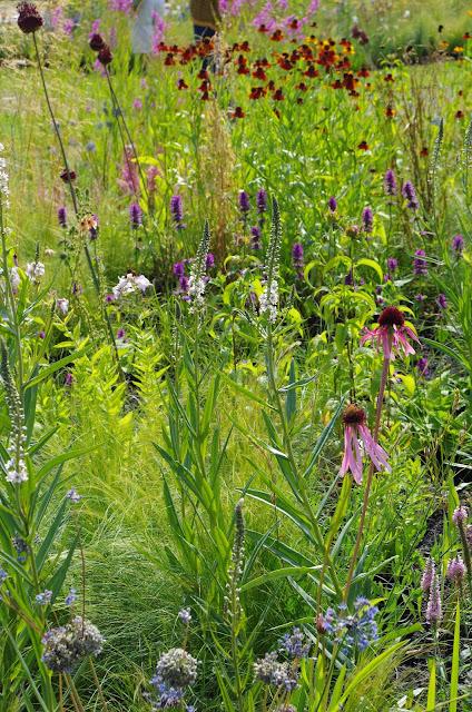 piet-oudolf-byliny-trawy-echinacea