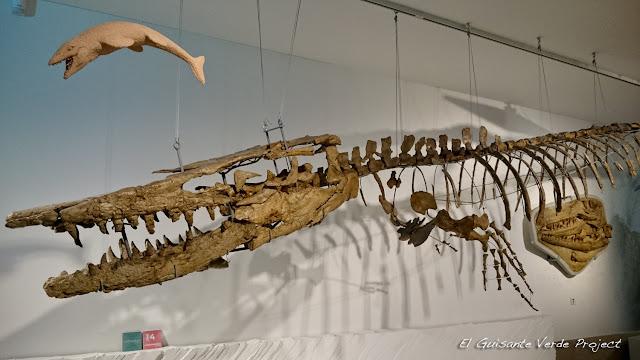 100Masters,  Museo Ciencias Naturales - Bruselas por El Guisante Verde Project