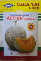 melon action orange,melon,buah melon,benih melon,budidaya melon,rock melon,bibit melon