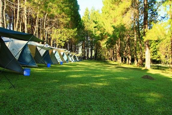 Pine Forest, salah satu tempat wisata kemah di bandung