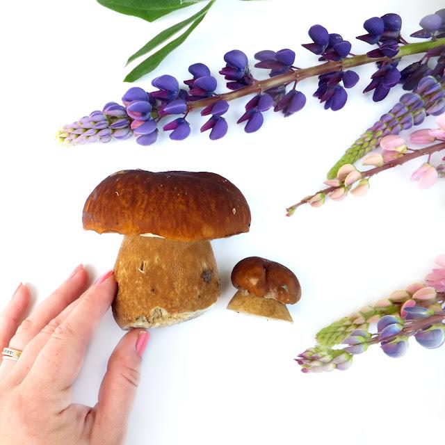 гриб боровик, белый гриб