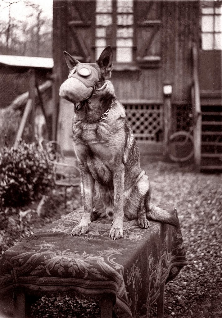 Dog With Gas Mask, 1917  Vintage Everyday