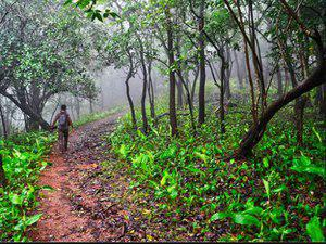Spotlight : ICFRE Signed MOU With TIFAC for Supporting Forest Based Communities