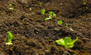 Toprağın Hayatımızdaki Yeri ve Önemi