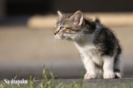 Czy koty potrafią liczyć?