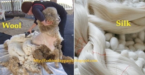 Wool and silk fiber