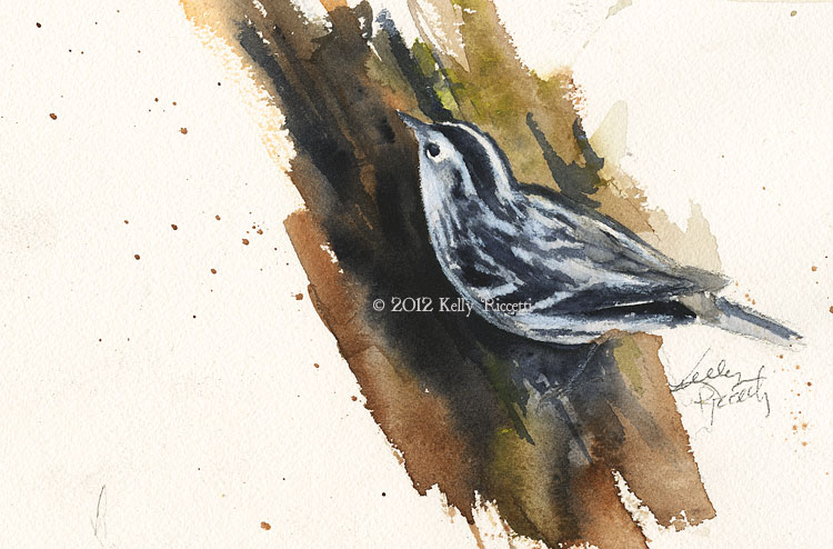 Original watercolor painting of a Black and White Warbler by Kelly Riccetti