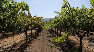 La industria vitivinícola y el gobierno mendocino reclamaban por lo bajo un dólar a $ 24. Foto: Archivo