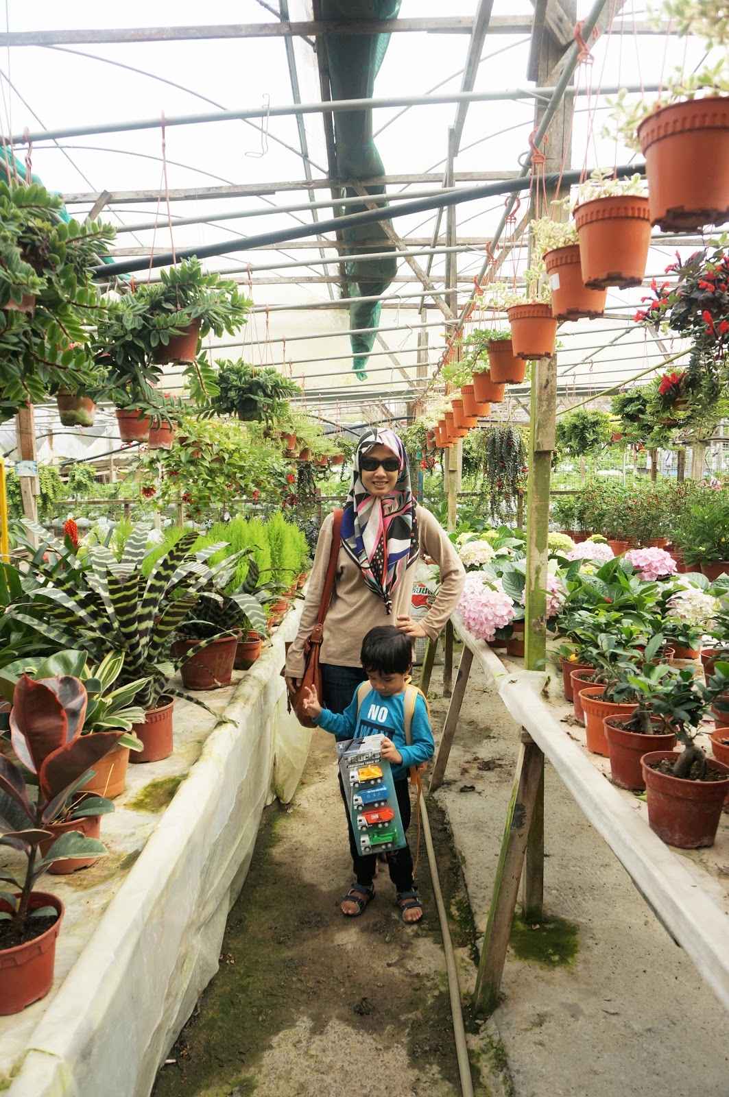 Sweet Escape To Cameron Highland With Familia│Abang Strawberry Farm & Healthy Strawberry Farm