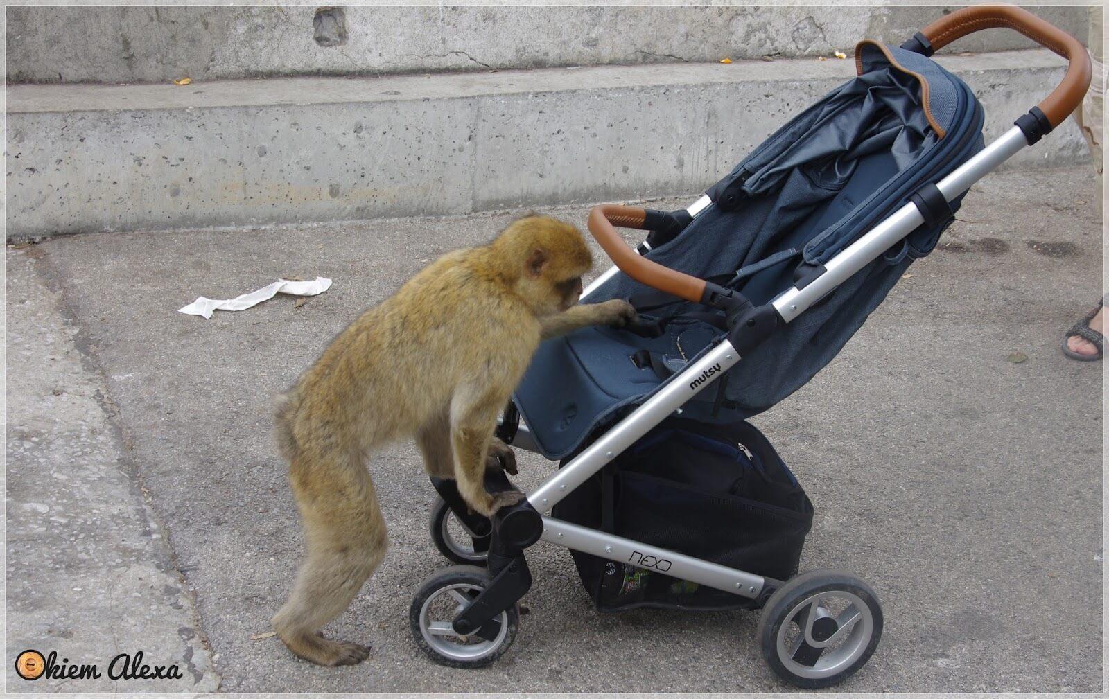 Gibraltar z dzieckiem