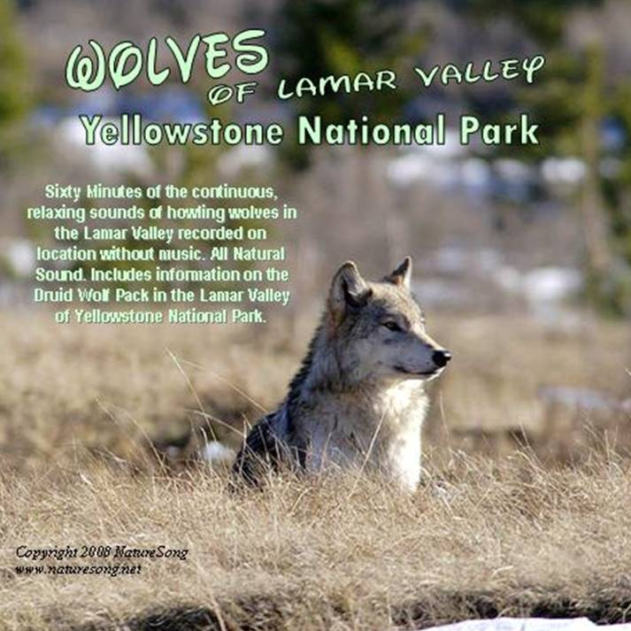 BEST NATURE SOUNDS CD's: Nature CD's-WOLF SONGS of