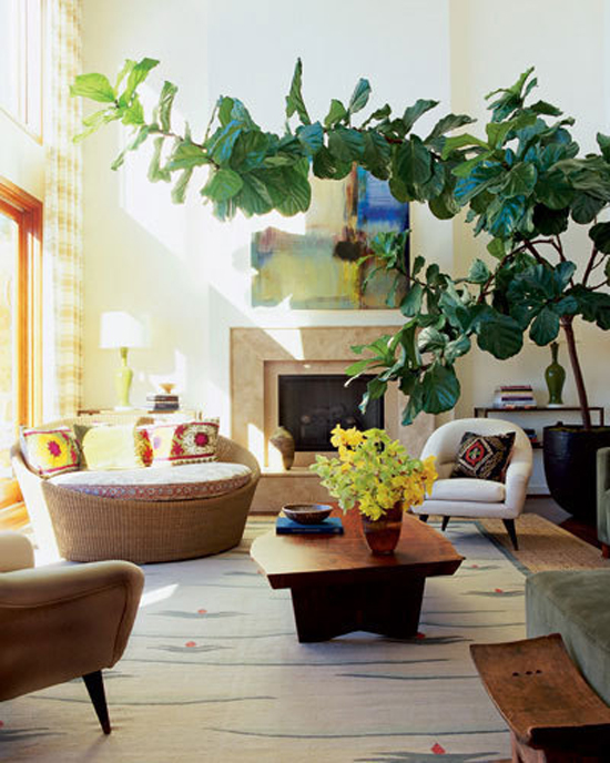 The Search Is Over: How I Found The Elusive Fiddle Leaf Fig Tree