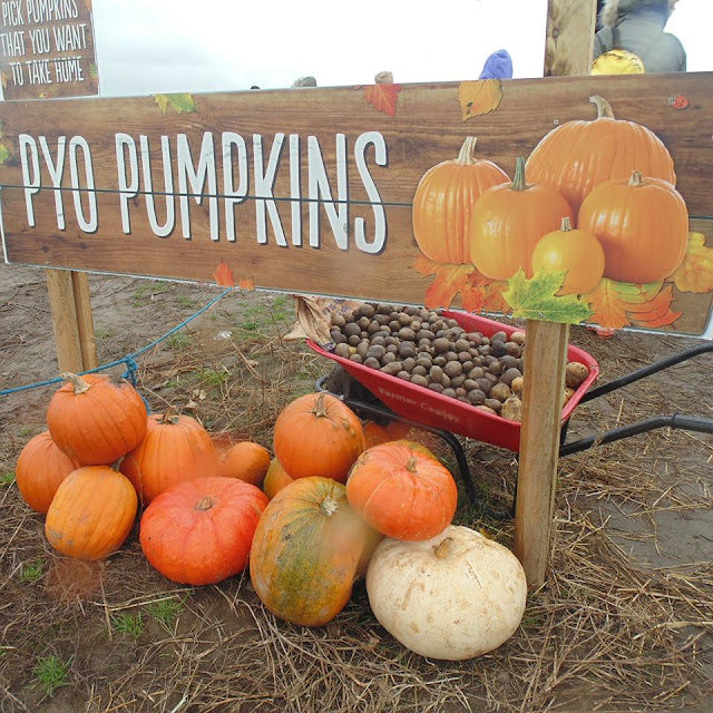 Pick your own pumpkins farmer Copleys 2015 sign