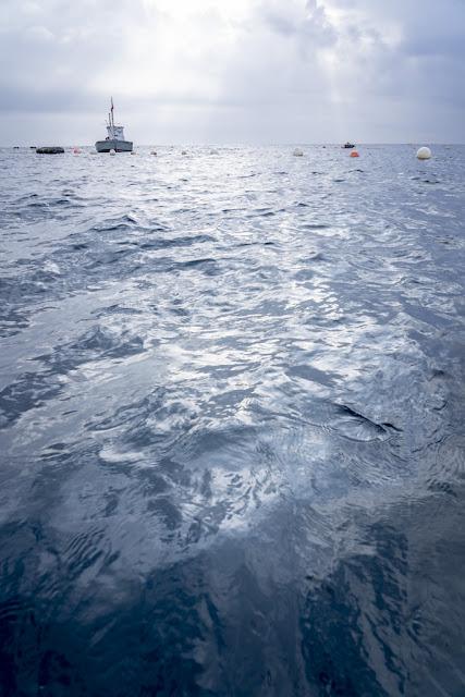 'Azul marino' por Carlos Larios