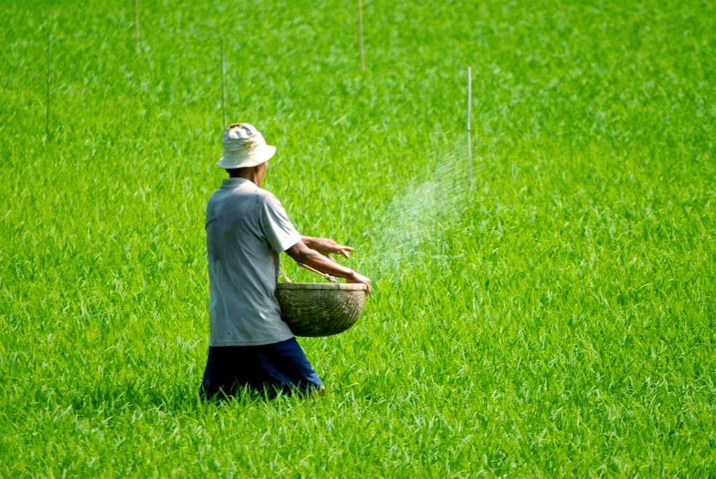 rijstveld vietnam