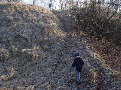 Zakrzówek, spacer na Zakrzówku, grzyby na Zakrzówku, Xylaria-polymorpha-próchnilec-maczugowaty, kisielnica-kedzierzawa-Exidia-plana, Flammulina-velutipes-płomiennica-zimowa