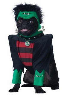 dog halloween costumes spider