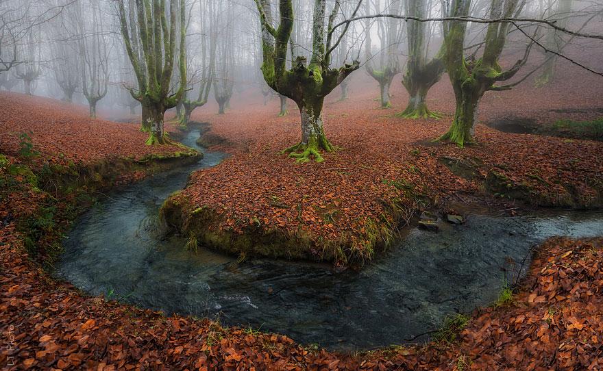 autumn-photography-4