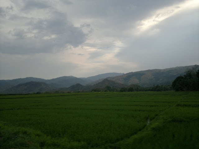 Rice Fields in San Clemente Tarlac
