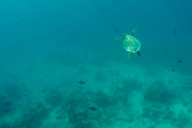 Una tortuga marina y peces en Gili Trawangan