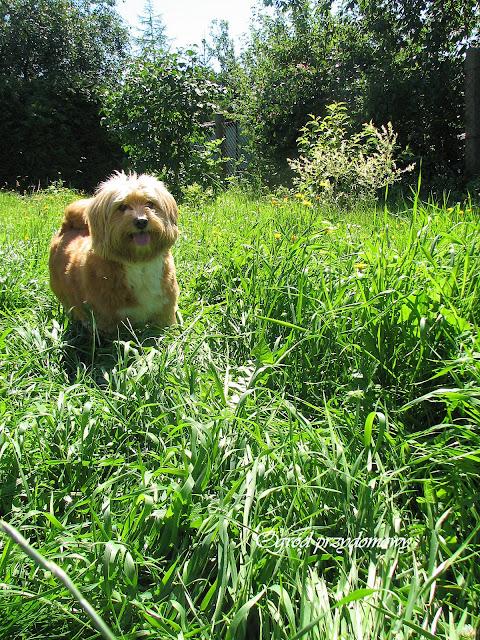 Trawę skosić trzeba