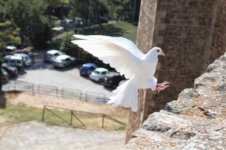 colomba che vola su un muretto