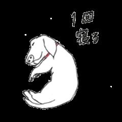 funny dachshund sabon