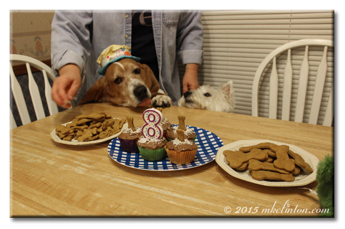 Bentley Basset and Pierre Westie ready for birthday cake and cookies