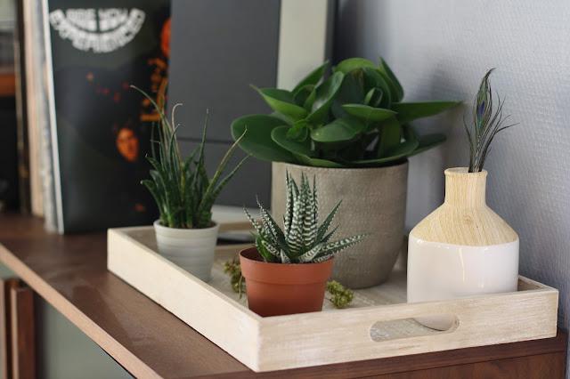 plantes verte a la maison