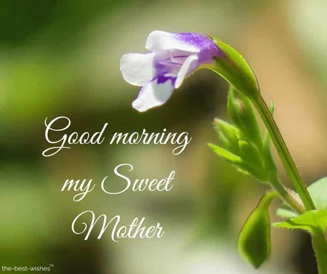 good morning my sweet mother