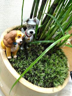トクサと白鷺カヤツリスゲの庭