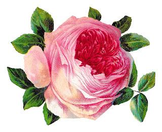 rose flower shabby chic floral digital download image botanical art