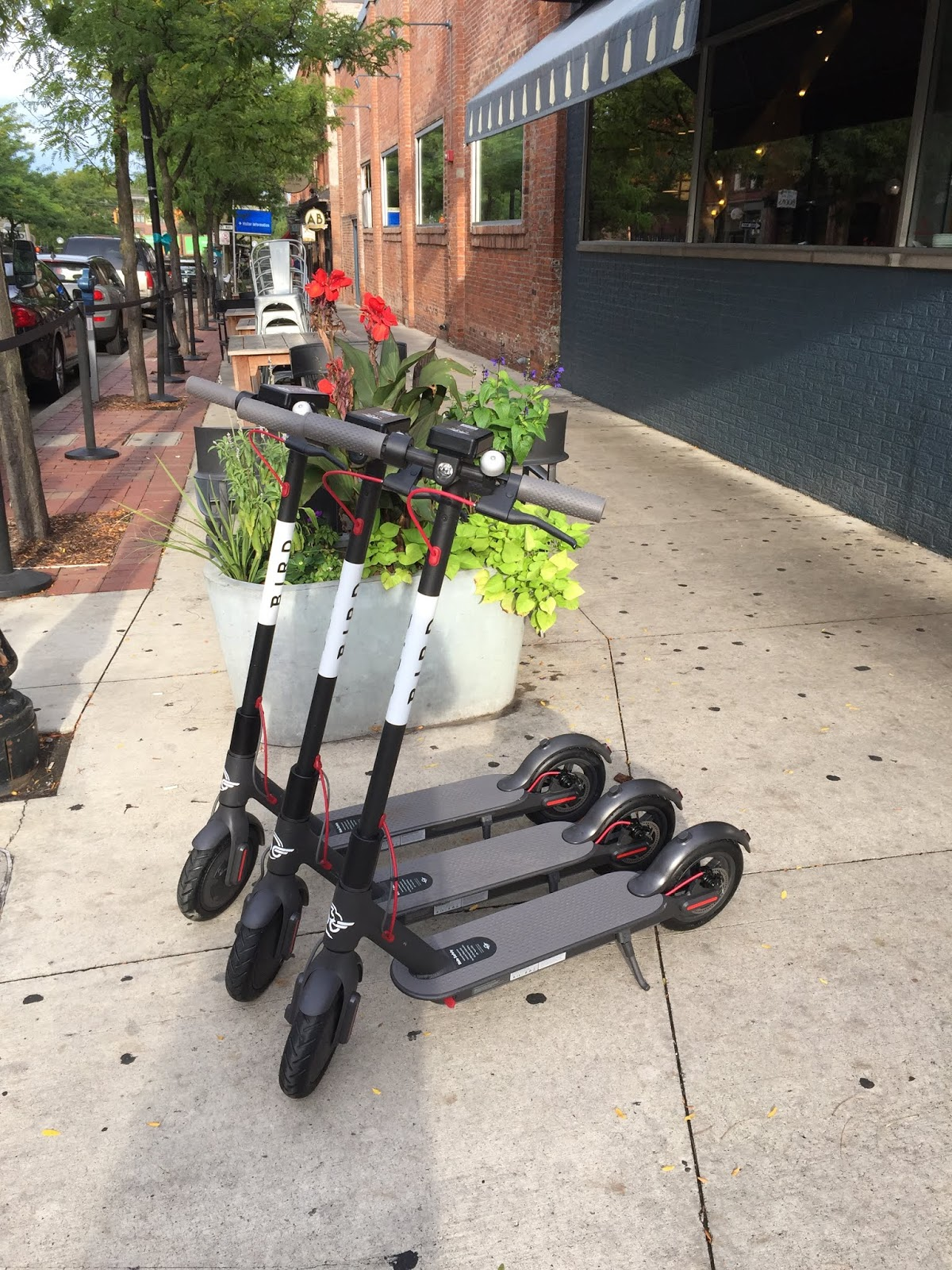 Damn Arbor: Bird Scooters have arrived in Ann Arbor