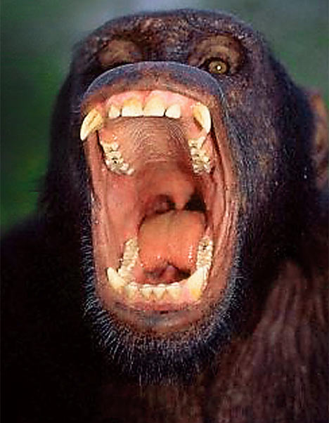 Trapezium: week 4 Comparative Primates