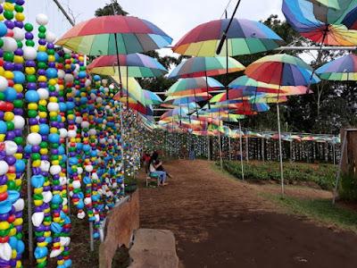 penuh warna spot hujan payung dan bola taman bunga celosia