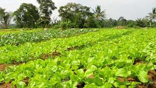 Cara Untuk Memulai Bisnis Pertanian