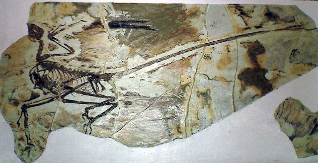 como comenzo el origen y evolución de las aves modernas - aves fosiles