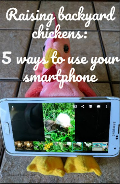 Using your smartphone for raising chickens